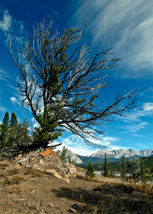 Mighty Tree | Copyright © 2010 Tom Laube