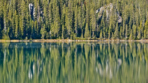 Forest Reflection in Bow Lake