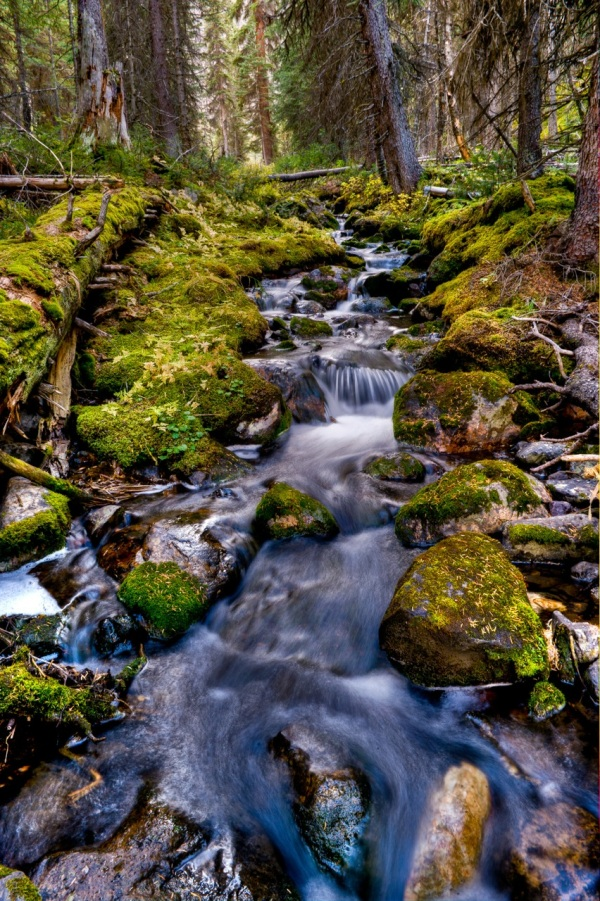 Stream Copyright © 2011 Barry Ryziuk