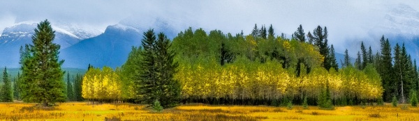 Aspen Copyright © 2011 Barry Ryziuk