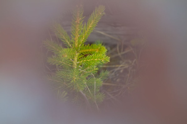 Evergreen Copyright © 2012 Valentina Furukawa