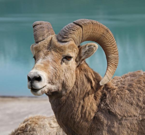 Sheep Copyright © 2012 Valentina Furukawa
