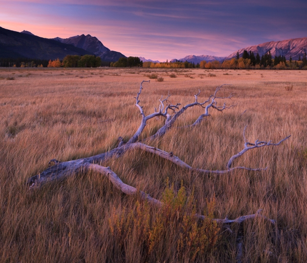 Sunset on Kootenay Plains, Copyright © 2012 Garrett Atkins