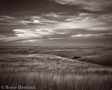 Enchantment, Cypress Hills, by Royce Howland.
