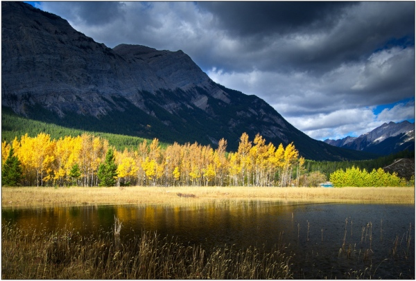 Aspen in Sun before the Storm. Copyright © John Gobey.
