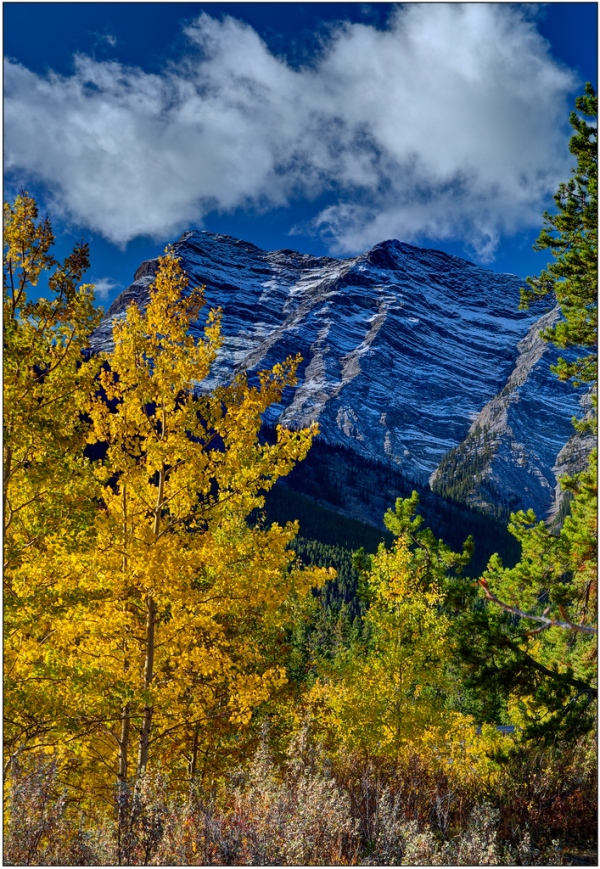 Elliott Peak through Aspen. Copyright © John Gobey.